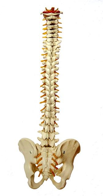 la fusion vertébrale ou Spondylodèse